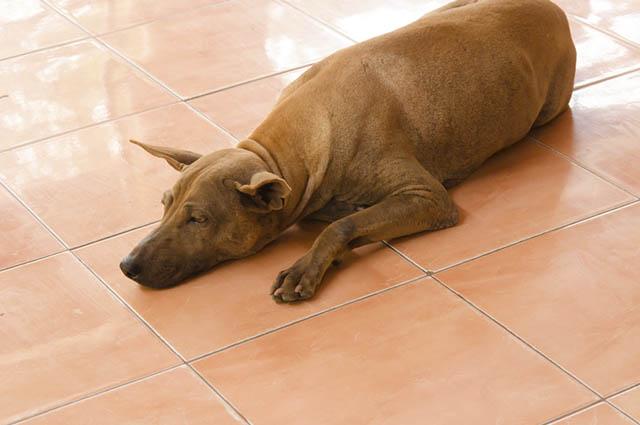 O piso de cerâmica também serve para refrescar os pets nos dias mais quentes