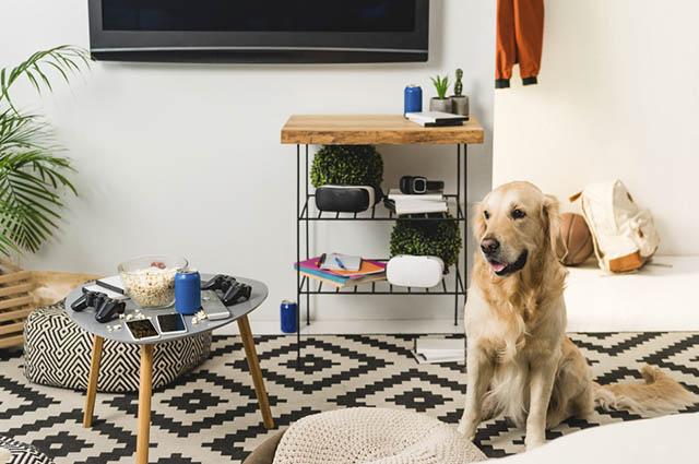 Entre as adaptações na decoração da casa para os cachorros, os objetos de vidro devem ser evitados