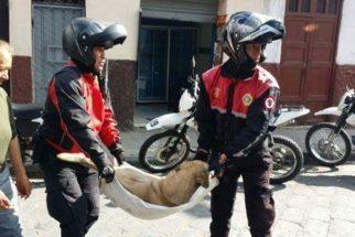 Cachorro de rua é salvo por dois policiais