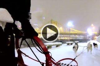 Cães levam tutor para passear de trenó durante nevasca
