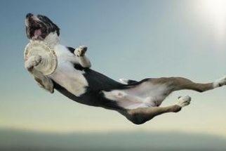 Cães podem voar? Em ensaio, fotógrafo italiano provou que sim