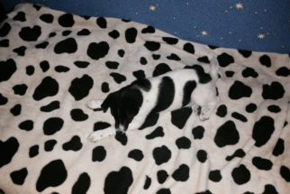 11 cãezinhos que estão perfeitamente camuflados