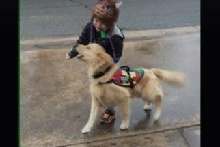 Cão de assistência auxilia criança autista a não ir para a rua