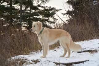 Cão salva a vida de águia-de-cabeça-branca ferida