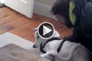 Cão se recusa a passear com dono e 'fala não' quando questionado