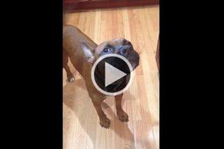 Cãozinho tenta 'cantar' parabéns no aniversário de tutora