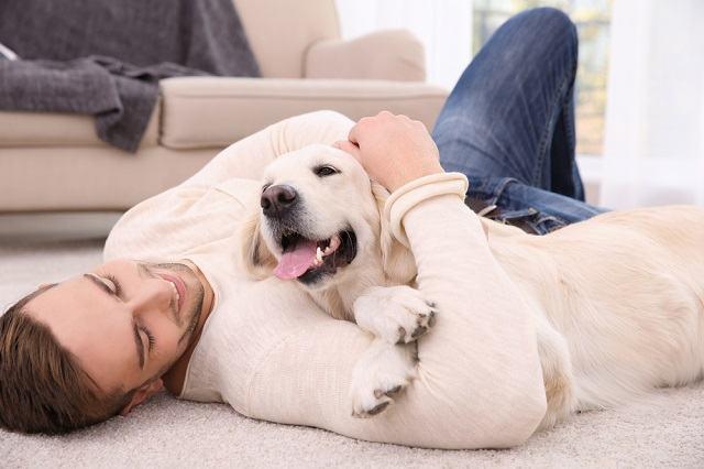 Conheça 10 Tipos De Cachorros De Serviço E Suas Funções