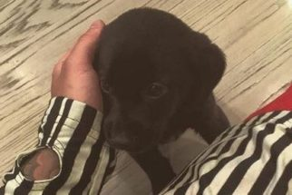 Conheça Phil, o novo 'xodó' canino do cantor Justin Bieber