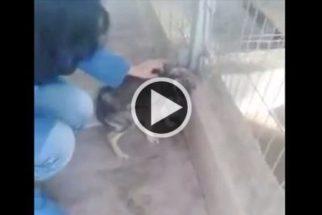 Devido maus tratos, cão tem reação dramática ao ser acariciado pela 1ª vez
