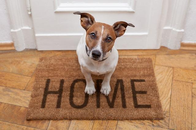 Dicas para decoração de apartamento para donos de cachorros