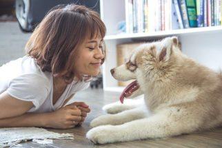 Donos de cães se sentem mais felizes do que os de gatos, revela pesquisa