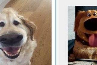Filtro do Snapchat 'transforma' seu cão em Dug, do filme 'UP'