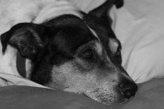 Gastrite em cães: saiba como tratar