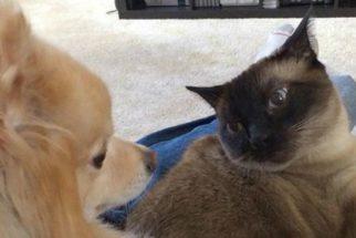 Provas que cães amam mais seus donos do que gatos