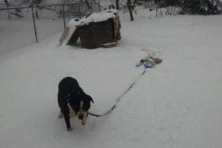 Homem é detido após fotografar cadelas presas expostas à nevasca