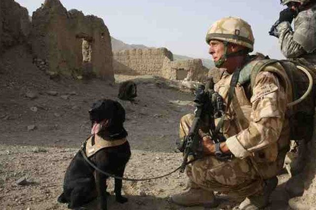 Homenagem: veterano de guerra faz tatuagem com cinzas de cão falecido