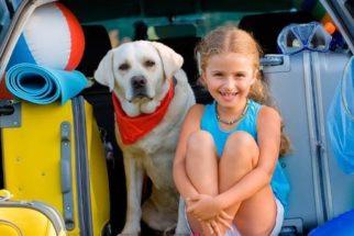 Orientações para saber antes de viajar com o cão para outro país