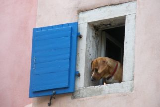 Por que os cachorros fogem tanto de casa?