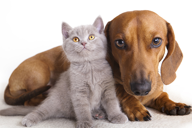 Existem alguns métodos para aproximar cães e gatos de maneira amistosa