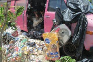 Chihuahuas que moravam em van cheia de lixo são resgatados