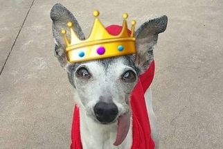 Zappa: a cadelinha que sempre está com língua para fora