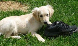 10-licoes-para-adestrar-seu-cachorro