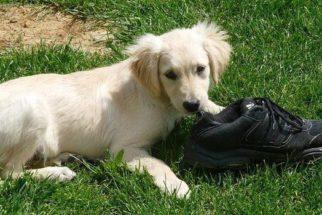 10 lições para adestrar seu cachorro