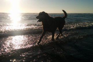 Noiva leva cão em estado terminal para conhecer o mar durante casamento