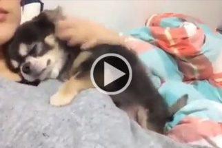 7 pequenos vídeos caninos muito fofos para alegrar o seu dia