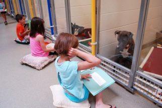 Abrigo convida crianças para leitura de livros para cães traumatizados