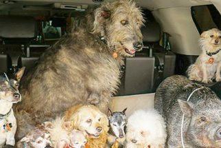 Homem dedica vida a cuidar de animais 'inadotáveis'