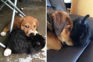 14 cães que continuaram fofos mesmo depois de grandes