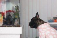 Cadela passa feriado inteiro de pijamas 'encarando' aquário