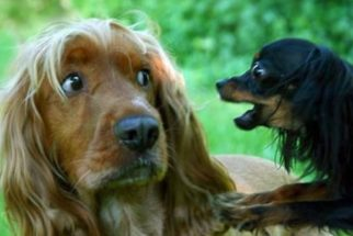 Cães resumem momentos de uma vida amorosa em fotos