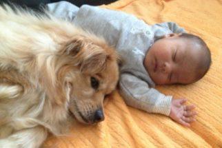 10 imagens de cães apaixonados por bebês