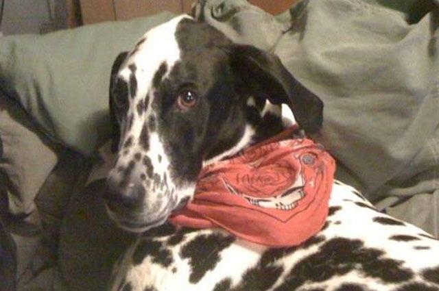 Herói: cachorro morre após salvar família de incêndio