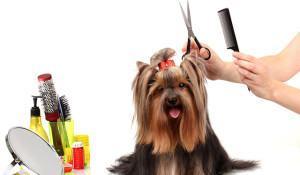 cadela-sendo-penteada