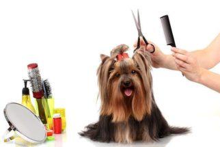 Concursos de beleza caninos: como funcionam?