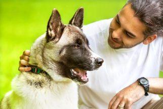 Aprenda como fazer seu cachorro te respeitar