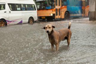 Conheça a difícil realidade dos cães na Tailândia