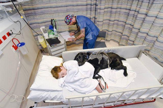 Cão leal a garoto autista o acompanha durante exame em hospital