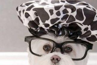 Conheça Toby, um dos cães mais estilosos da internet