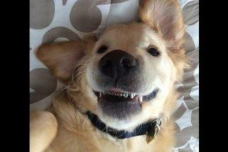 Conheça Wesley, o cãozinho que usa aparelho ortodôntico