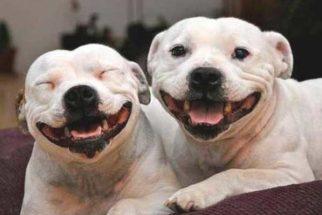 Confira 15 belas fotos de cães sorrindo