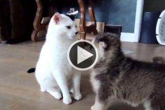 Fofura: cãezinhos tentam brincar com gato preguiçoso