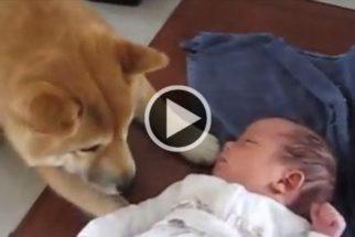Fofura: cão vê bebê da família pela primeira vez e demonstra simpatia
