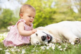 Como ensinar seus filhos a cuidar dos cachorros