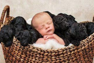 Curioso: tutora e sua cadela dão à luz no mesmo dia