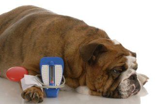 Descubra: cachorros podem ter pressão alta?