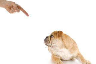 Dar bronca no cachorro resolve ou não?